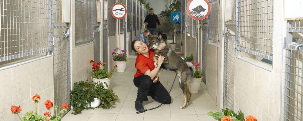 פנסיון לכלבים רמת גן