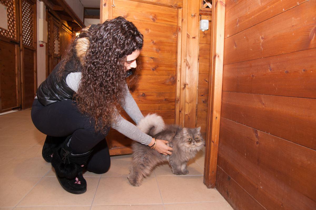 מטפלת בפנסיון לחתולים