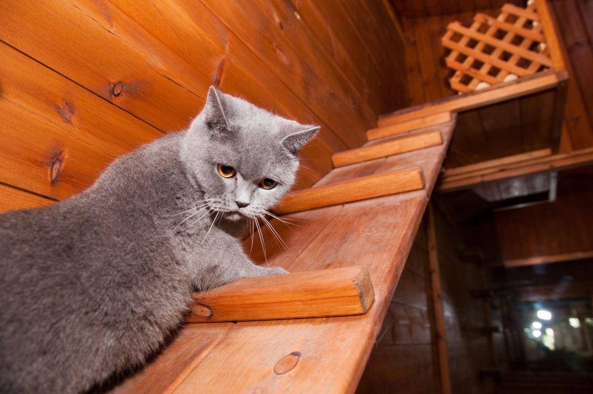 פנסיון לחתולים עם משחקים ופעילויות