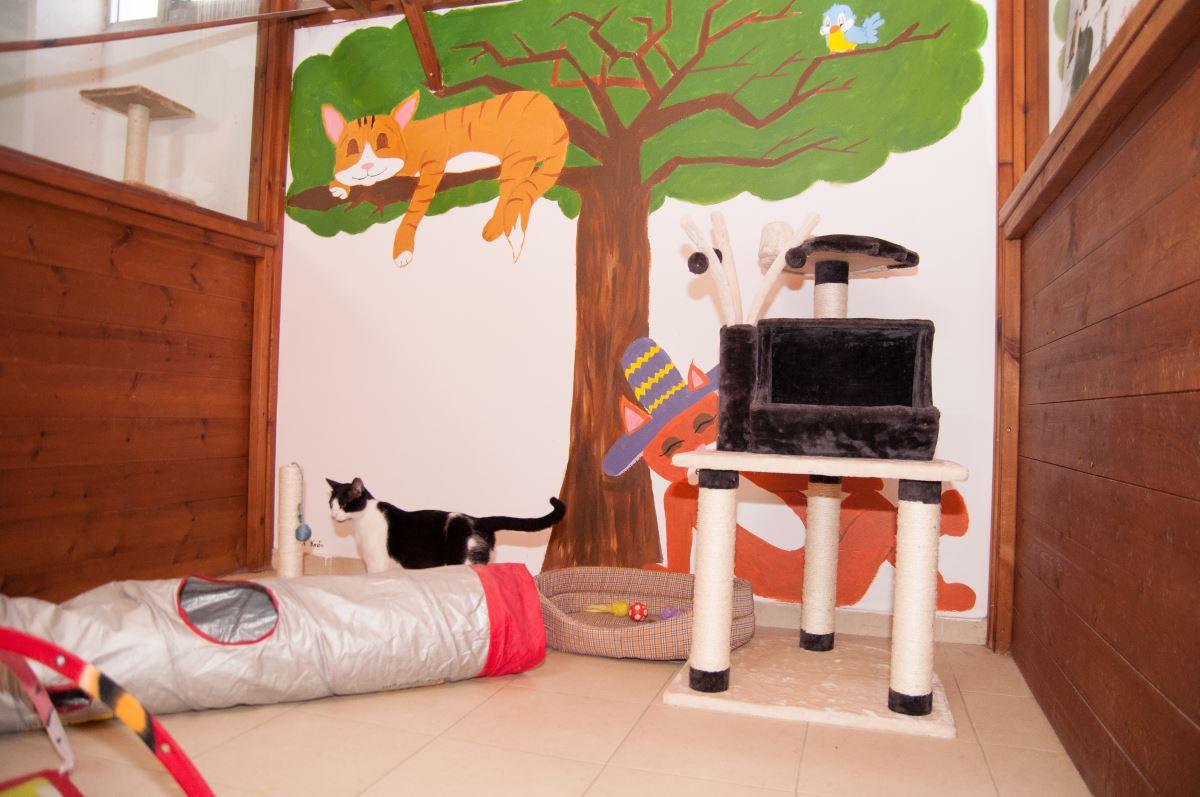 יחידה נפרדת לכל חתול עם משחקים