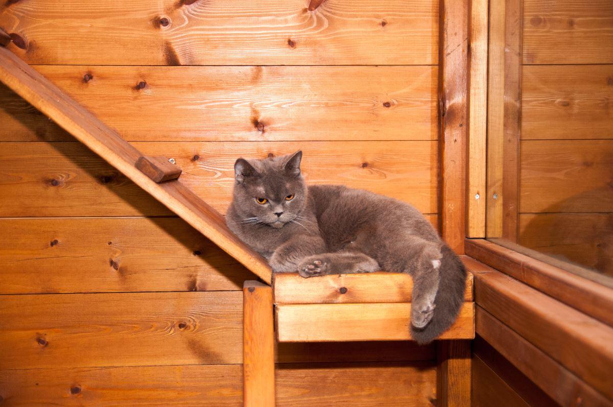יחידת עץ לחתול בפנסיון