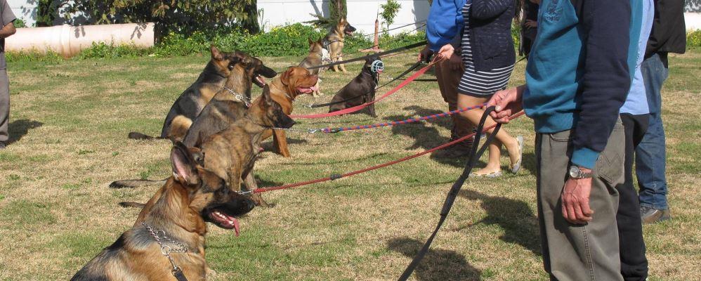 המטפלים והכלבים בפנסיון בית ארז דוגסלייף