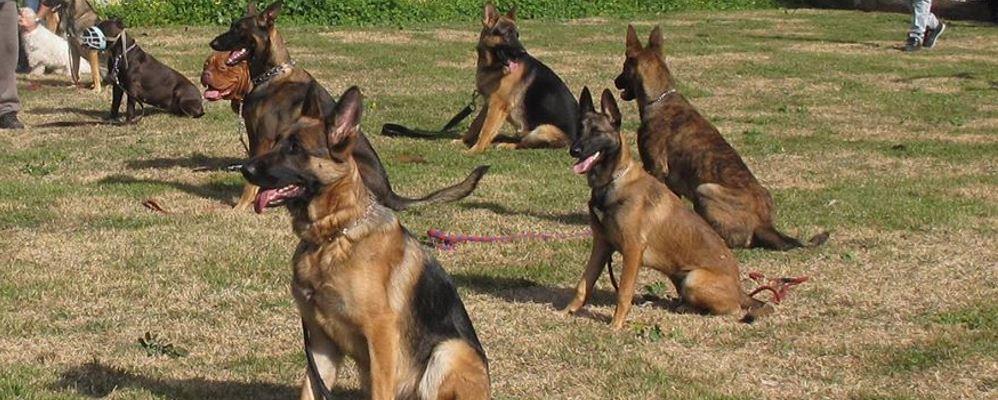 הכלבים בשעת חצר בפנסיון של בית ארז