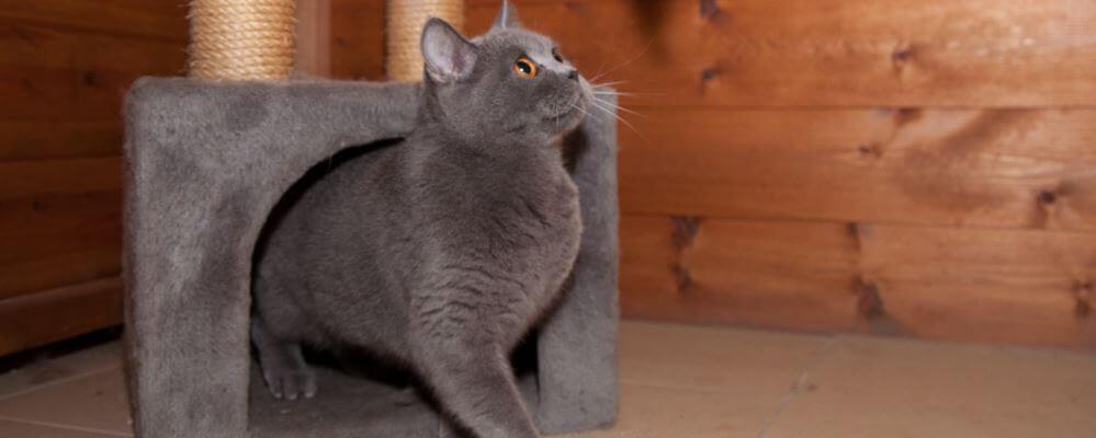 פנסיון לחתולים במרכז של בית ארז