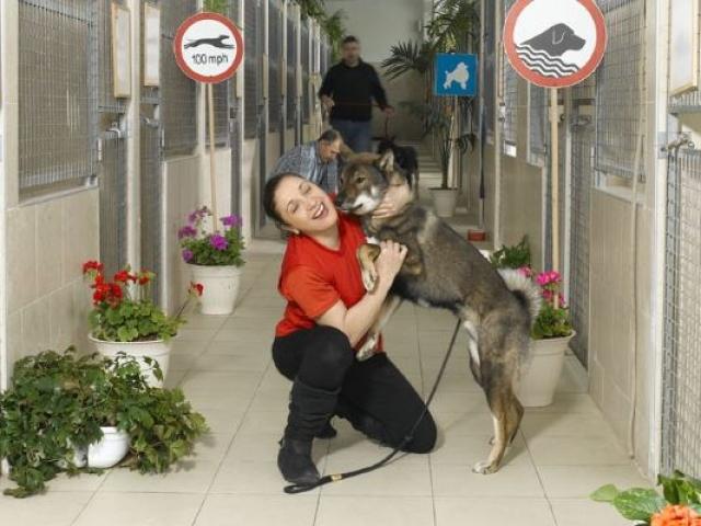 פנסיון ברמה של בית מלון לכלבים
