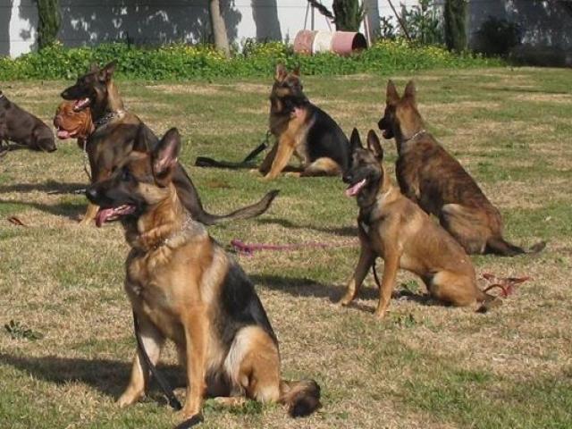 פנסיון לכלבים תל אביב של בית ארז