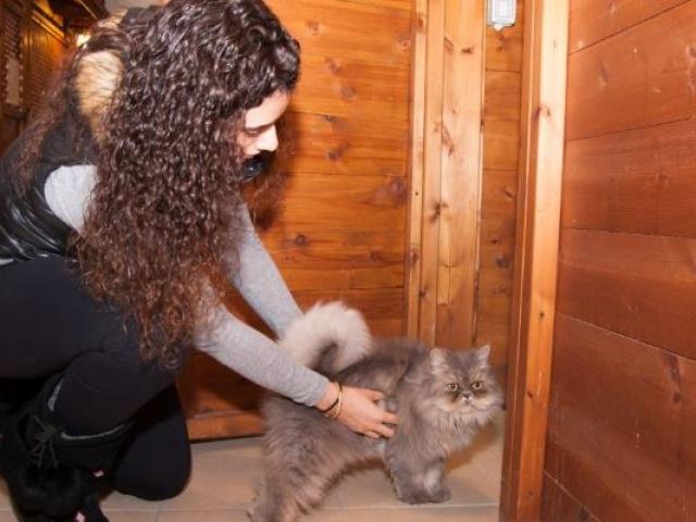 שירותי פניסיון לחתולים בתל אביב