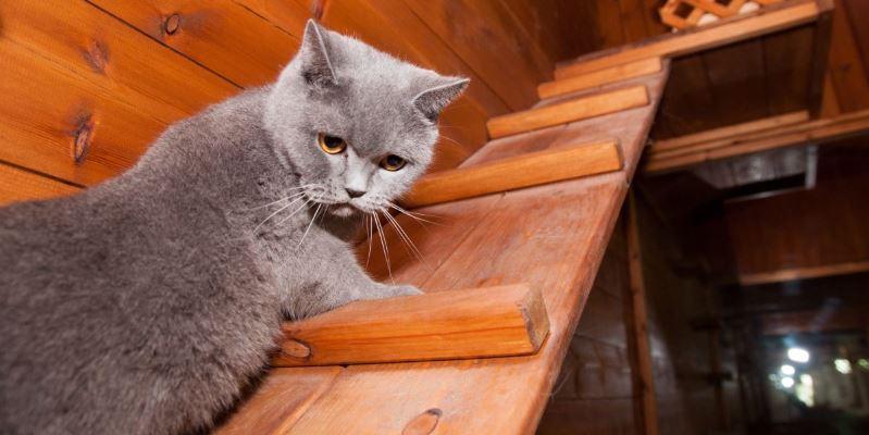 חתול מדהים בפנסיון בית ארז דוגסלייף