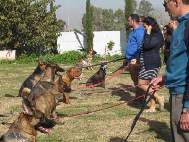 אילוף כלבים בפנסיון