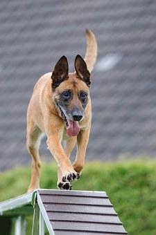 אימון כלב בפנסיון