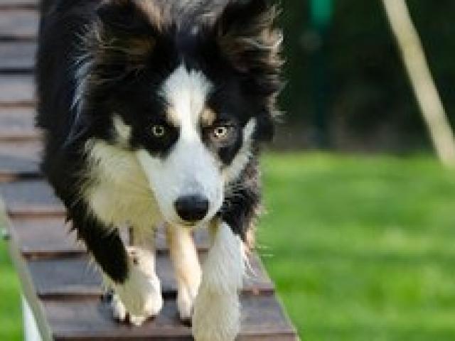 כלב משחק בפנסיון