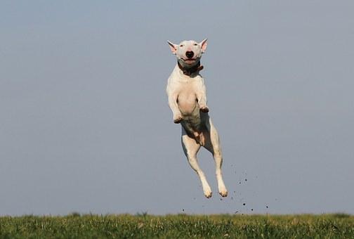 כלב מקפץ בפנסיון כלבים של בית ארז