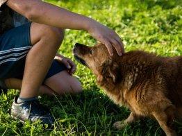 פנסיון כלבים בפתח תקווה של בית ארז