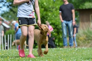 כלב עם מאמן בפנסיון