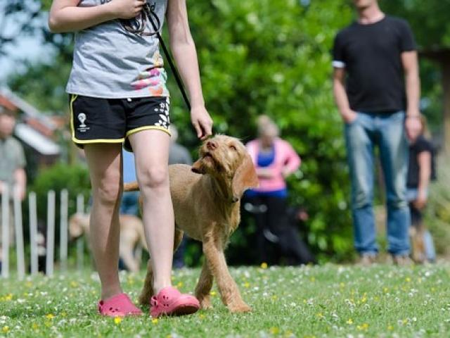 כלב עם מטפלת בפנסיון לכלבים בפתח תקווה