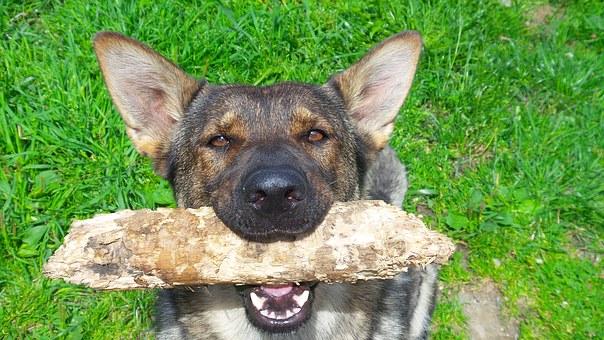 כלב בפנסיון של בית ארז
