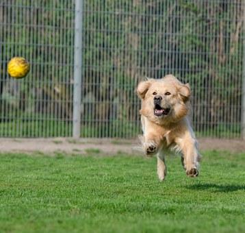כלב משחק עם כדור בפנסיון בראשון לציון