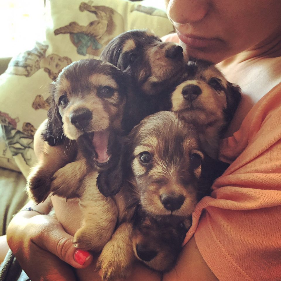 בייביסיטר לכלבים