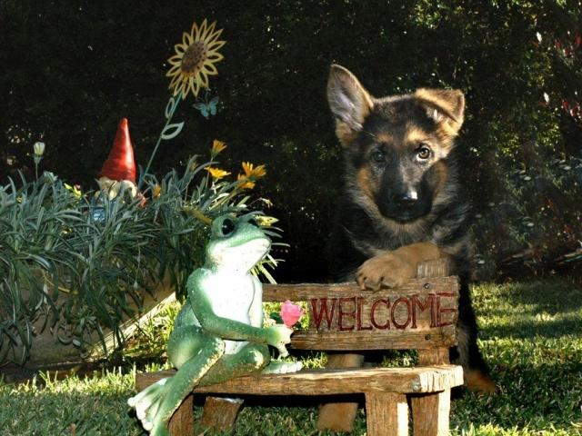 תמונת כלב בדשא הפנסיון