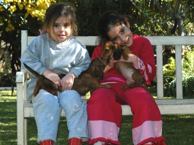 פנסיון לכלבים במודיעין
