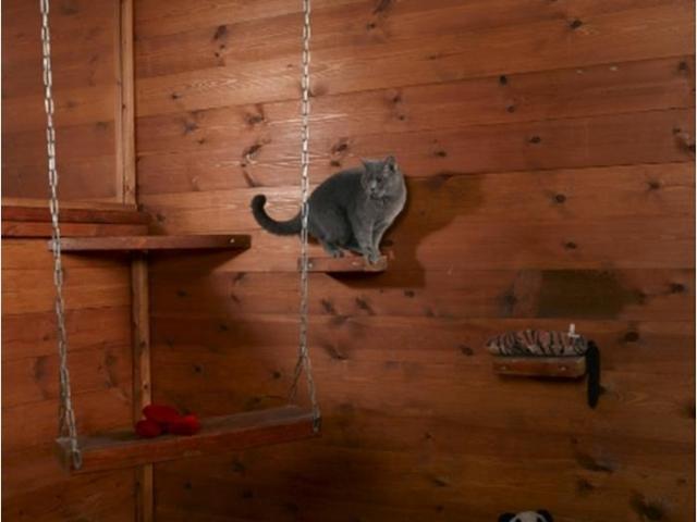 חתול משחק ביחידה בפנסיון