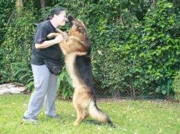 מטפלת משחקת עם כלב בפנסיון