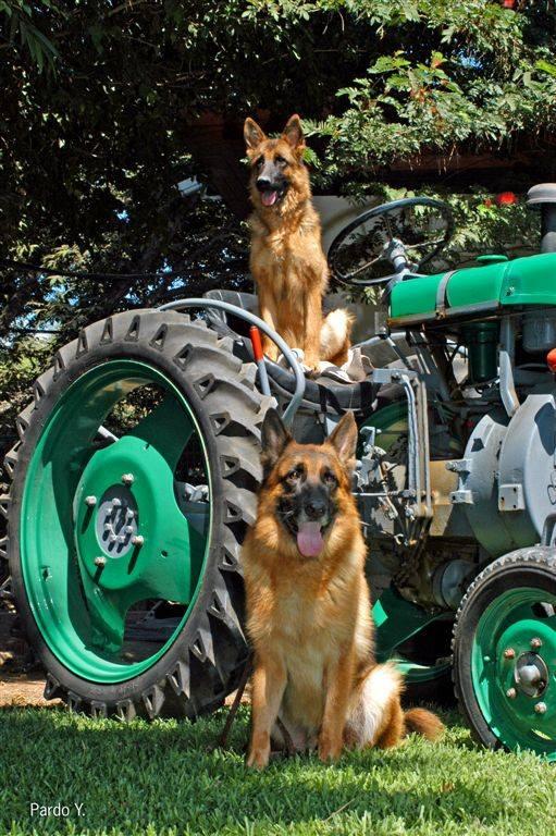 פנסיונים לכלבים