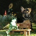 פנסיון לכלבים בית ארז