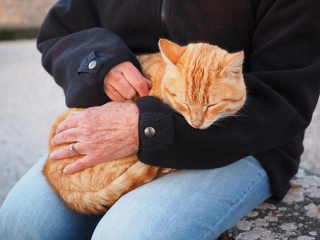 חתול ישן בידיים של מטפל בפנסיון