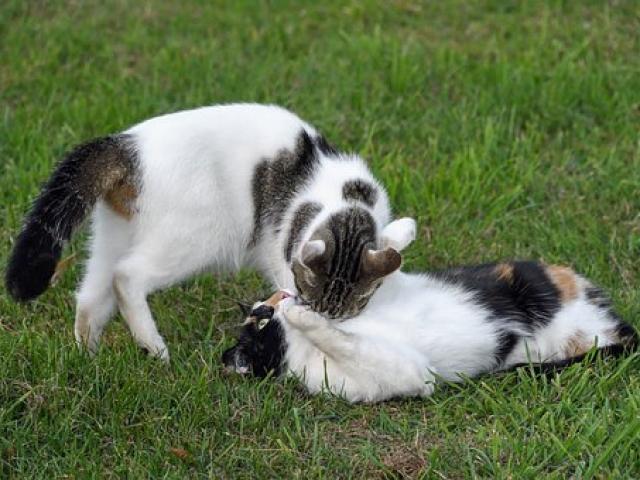 חתולים משחקים על הדשא בפנסיון