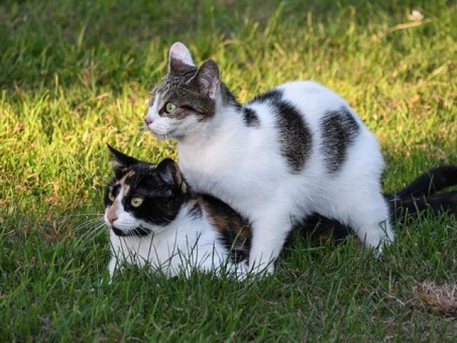 חתולים על הדשא