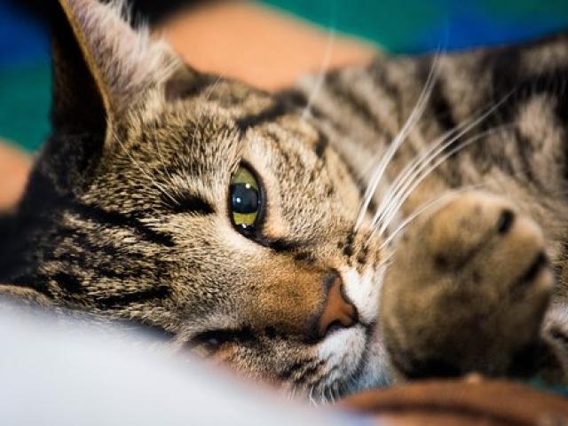תמונת תקריב של חתול בפנסיון