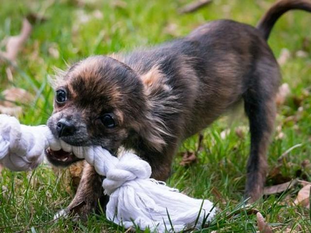 כלב משחק בזמן אילוף בפנסיון