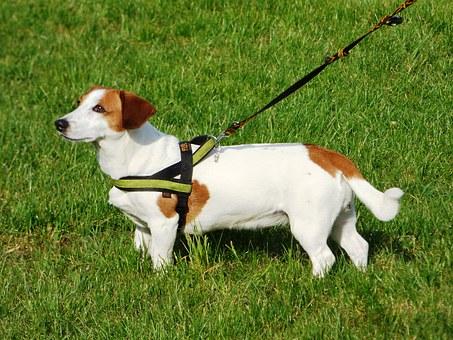 כלב על דשא הפנסיון בראשון לציון