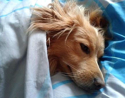 כלב ישן בחדרו בפנסיון כלבים