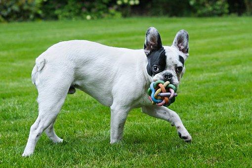 כלב משחק עם כדור