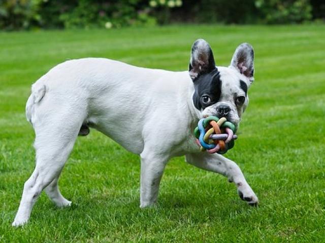 כלב משחק בפנסיון לכלבים