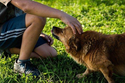 ילד מלטף כלב