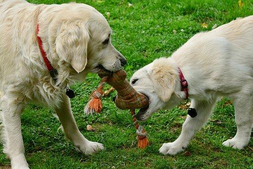 פנסיון הכלבים של בית ארז